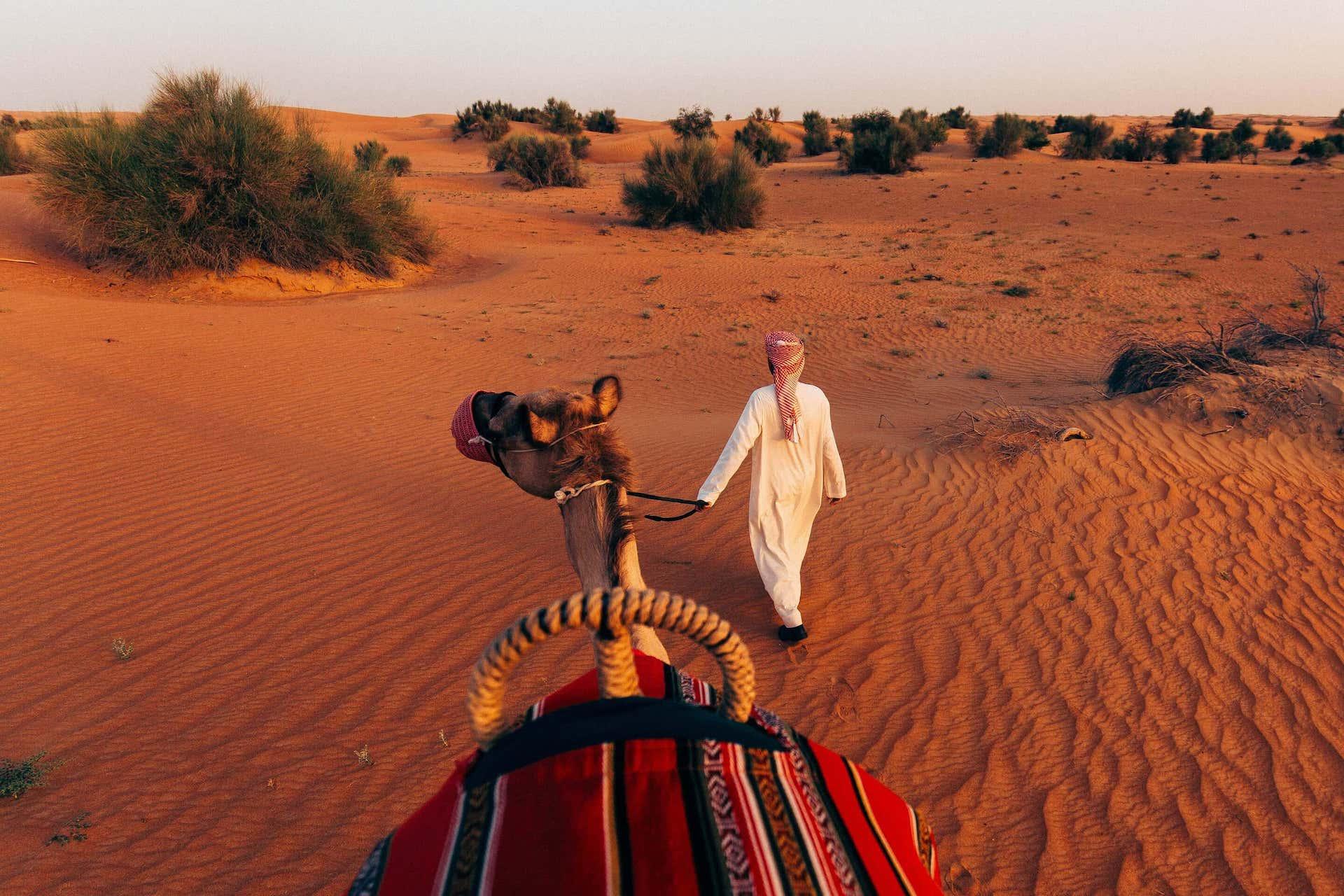 Camel Al Maha, a Luxury Collection Desert Resort & Spa Dubai, фото