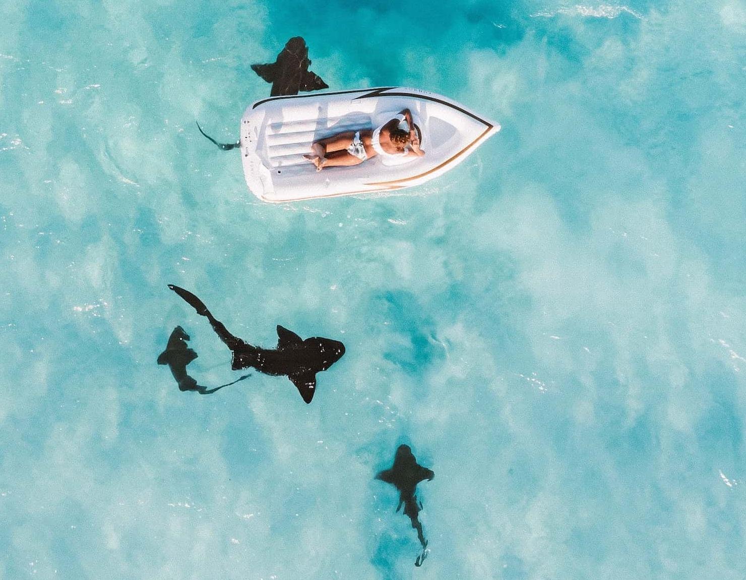 Плавание со скатами Мальдивы, фото