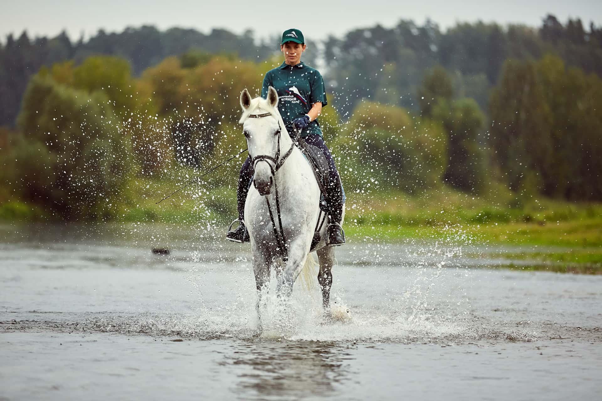 Московский конный завод № 1, фото