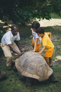 Kids Tortoise Feeding Seychelles, фото