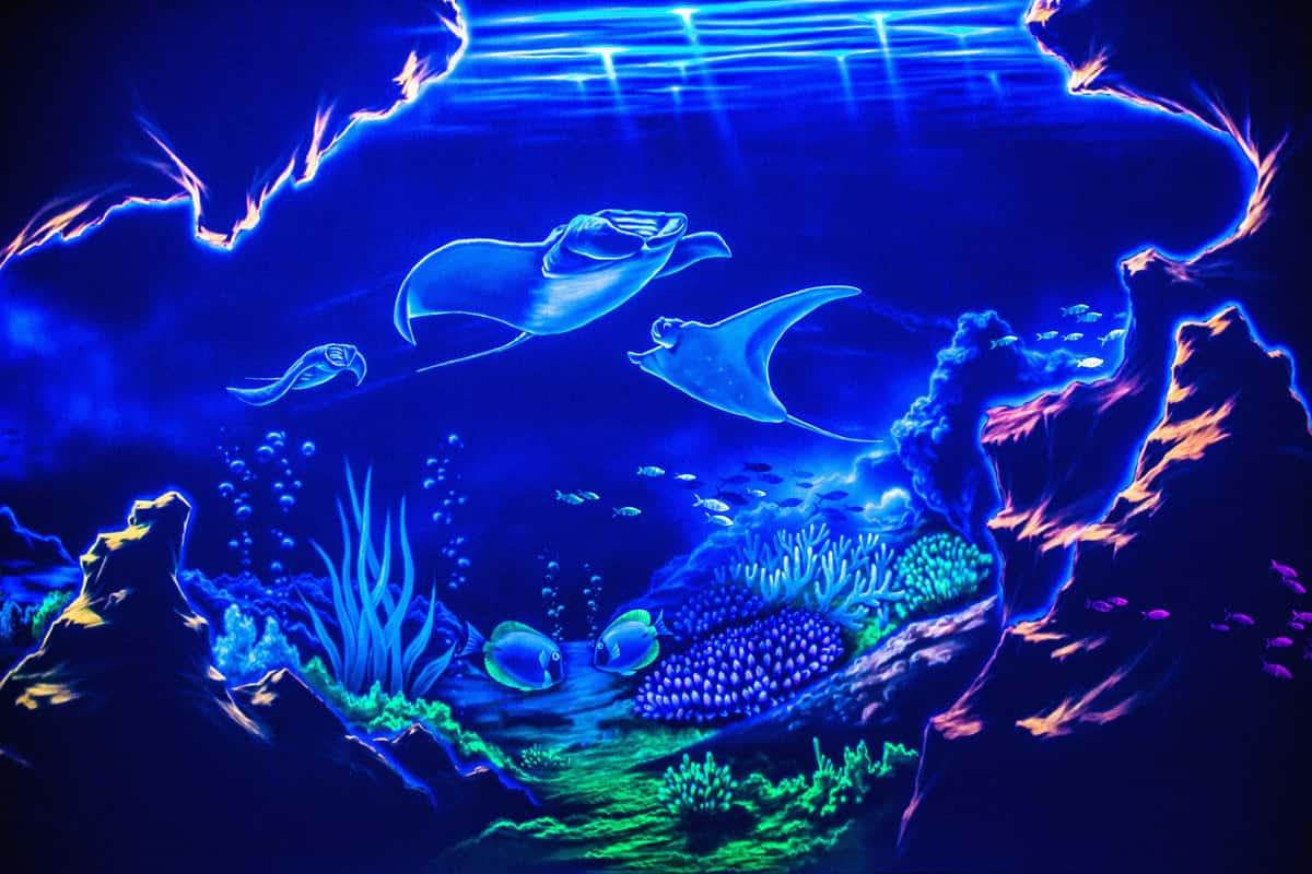 Sochi Discovery World Aquarium Exposition, фото