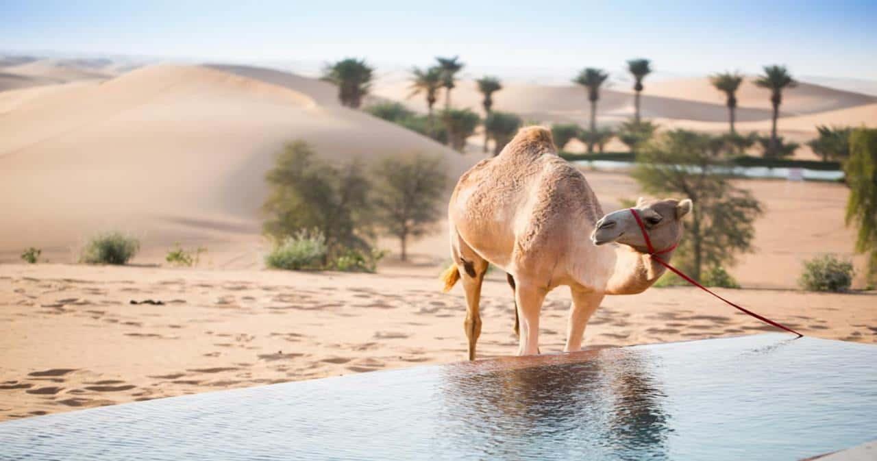 Telal Resort Al Ain Camel Абу-Даби, фото