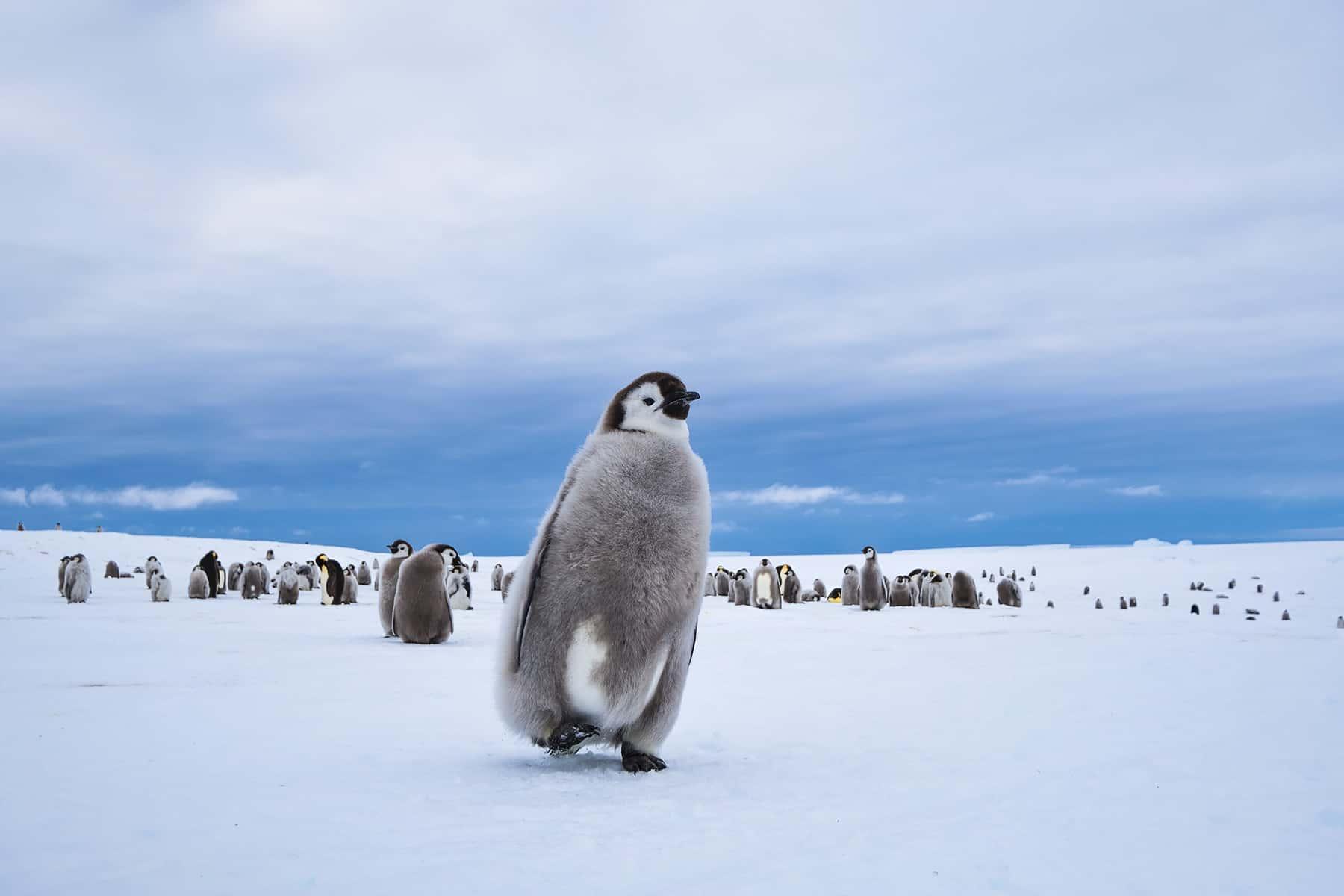 White Desert Pengwin Antarctica, фото