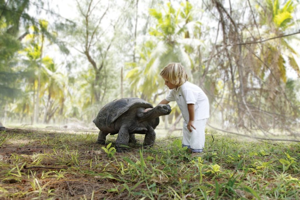 Four Seasons Resort Seychelles at Desroches Child with Tortoise, фото