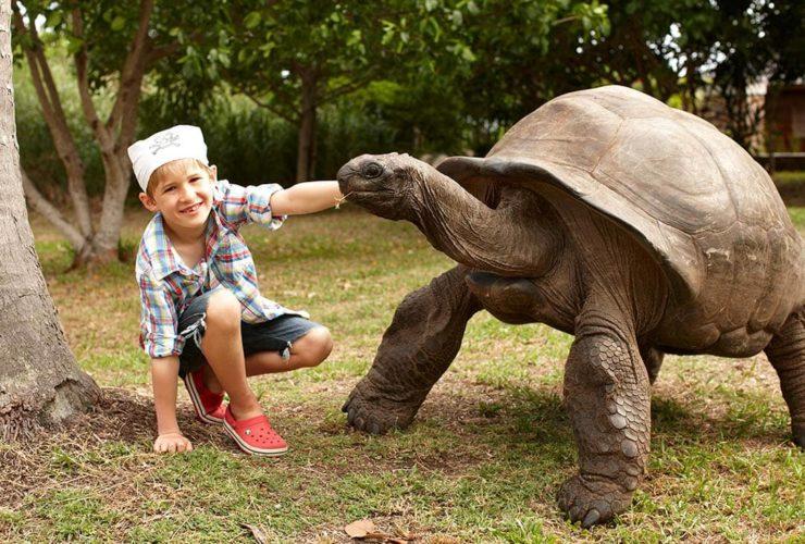 Fregate Island Seychelles Aldabra Giant Tortoise, фото