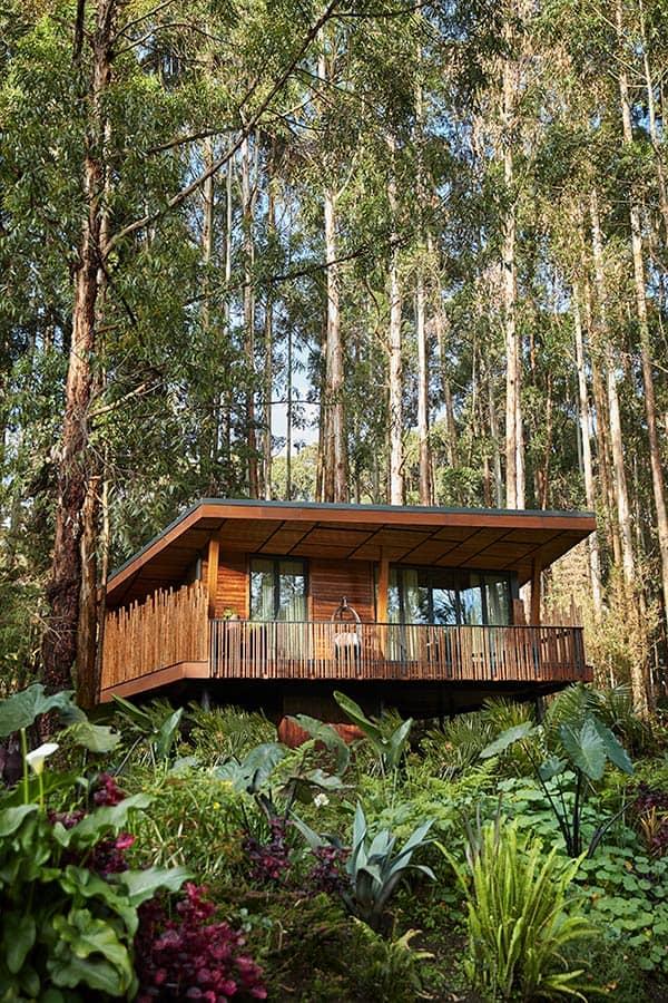 Resort One&Only Gorilla's Nest Rwanda Villa Forest Lodge, фото