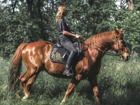 Horse Riding in Tula, фото