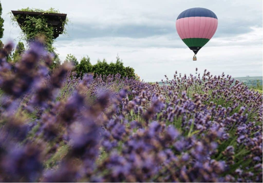 Lefkadia Valley Winery Air Ballon Flight Over Lavender Fields, фото