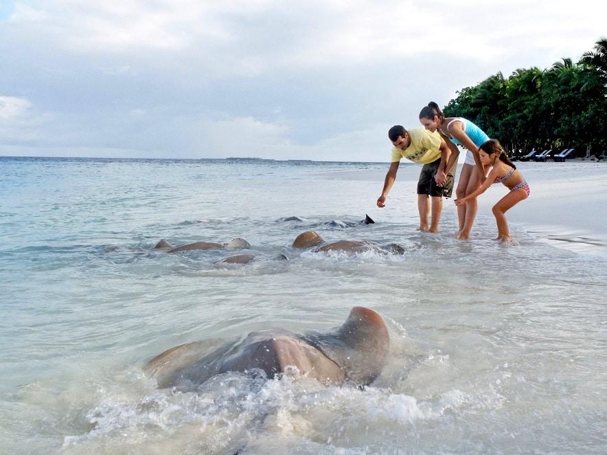 Скаты на Мальдивах